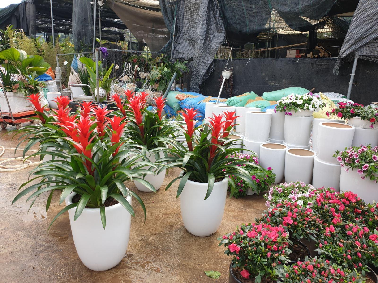 CayCanhNoiThat.vn - Cây cảnh nội thất, cây cảnh ngoại thất, cho thuê cây cảnh, cây cảnh trang trí, cây cảnh công trình