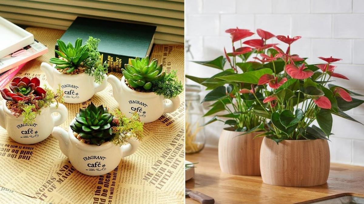 Chọn đúng loại chậu hoa nhỏ để bàn vừa làm đẹp lại nhiều may mắn